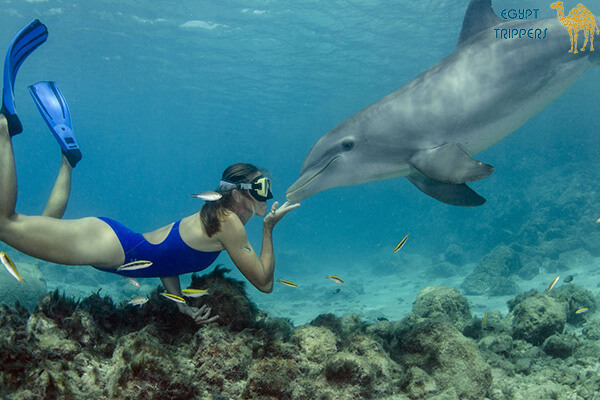 Dolphin House in Marsa Alam