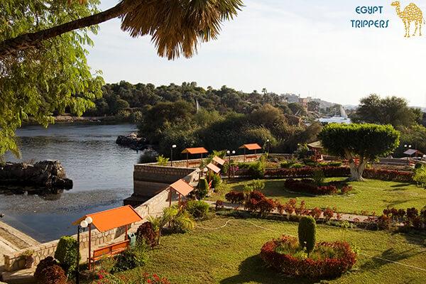 Island Plants in Aswan