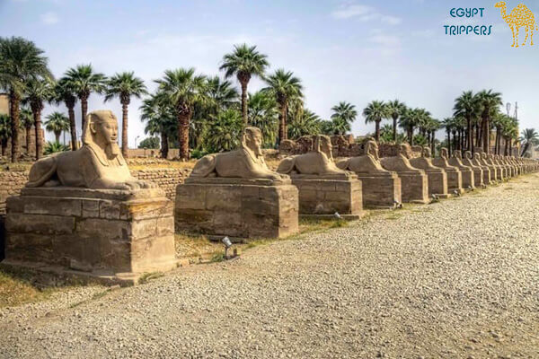 Sphinxes Avenue