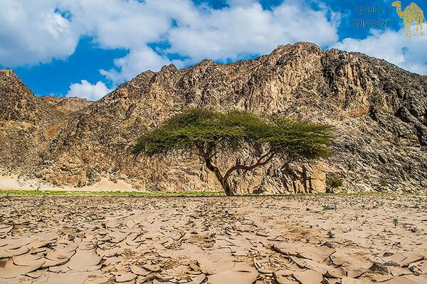 Wadi Al-Jamal and Jabal Hamata